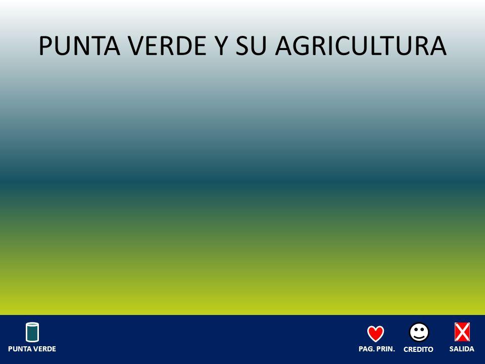 PUNTA VERDE Y SU AGRICULTURA SALIDA CREDITO PAG. PRIN.PUNTA VERDE