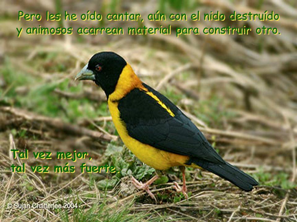Amo a los pájaros, más aún, los admiro. Después de una noche de lluvia y fuerte viento, por las mañanas están sus nidos destruídos cerca de los árbole