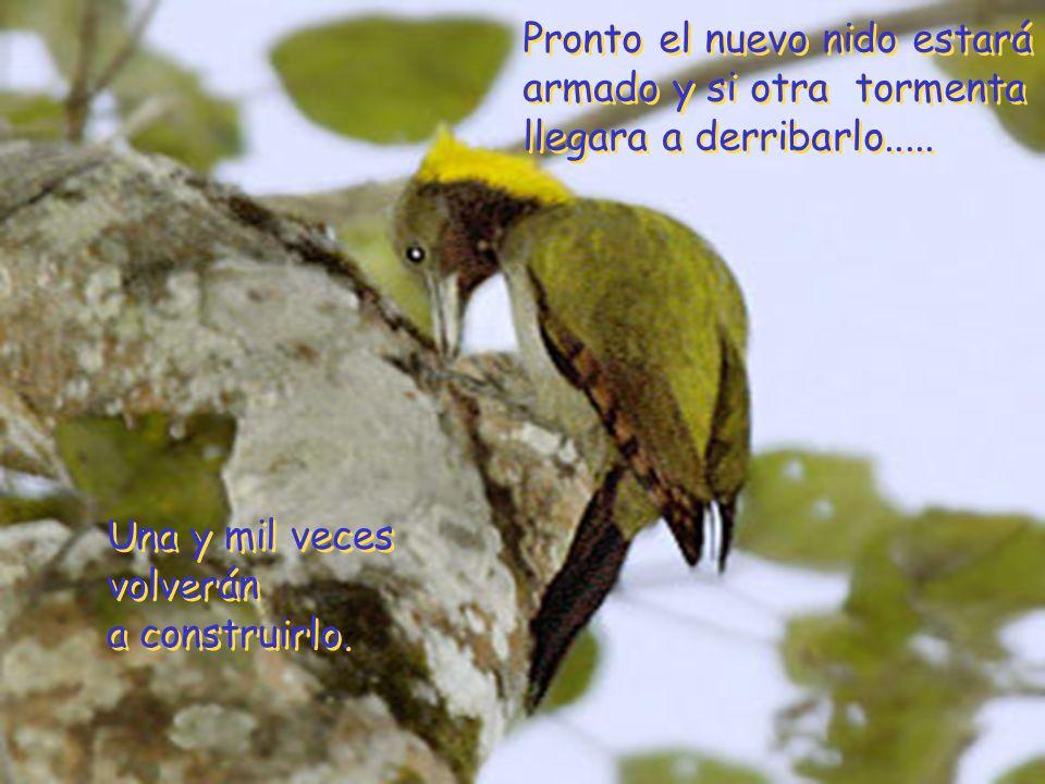 Por su nido roto, quizás los pájaros habrán callado un momento. ¡Solo un momento!. Por su nido roto, quizás los pájaros habrán callado un momento. ¡So