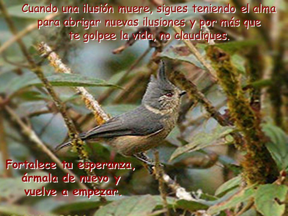 Admiro a los pájaros por su afán esperanzado. ¿Qué otra cosa es la esperanza sino el negarnos a los golpes de la adversidad?. Admiro a los pájaros por