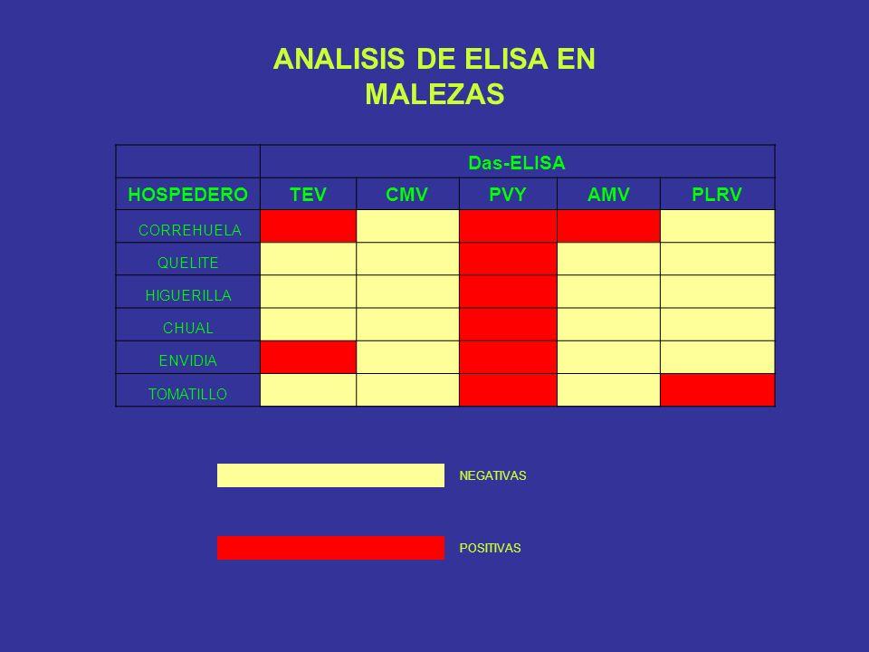 Das-ELISA HOSPEDEROTEVCMVPVYAMVPLRV CORREHUELA QUELITE HIGUERILLA CHUAL ENVIDIA TOMATILLO NEGATIVAS POSITIVAS ANALISIS DE ELISA EN MALEZAS
