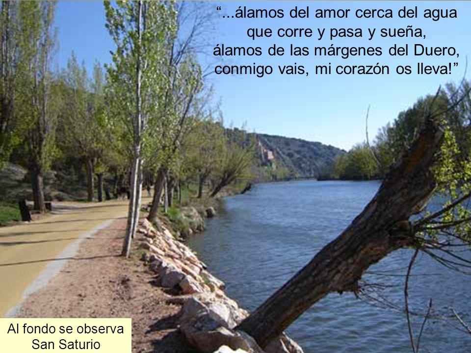 He vuelto a ver los álamos dorados, álamos del camino en la ribera del Duero, entre San Polo y San Saturio