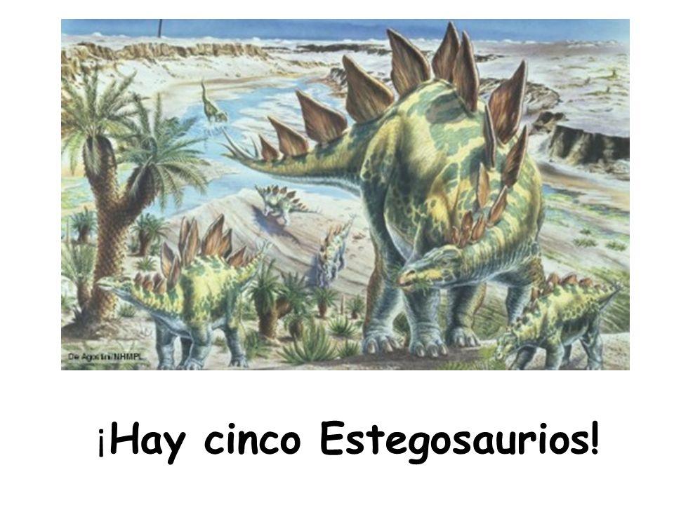 ¡ Hay cinco Estegosaurios!