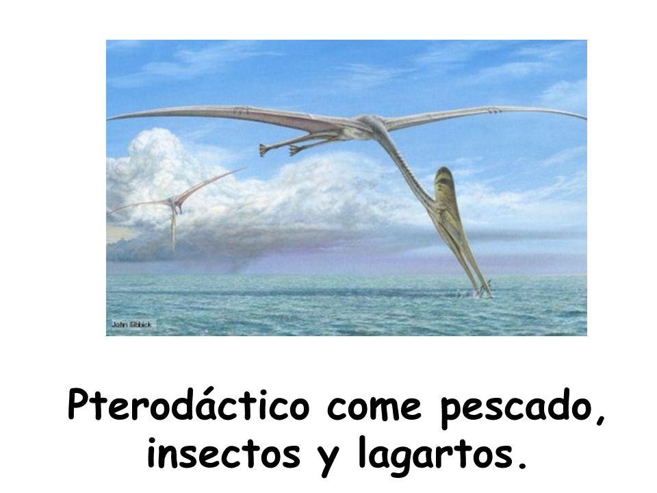 Pterodáctico come pescado, insectos y lagartos.