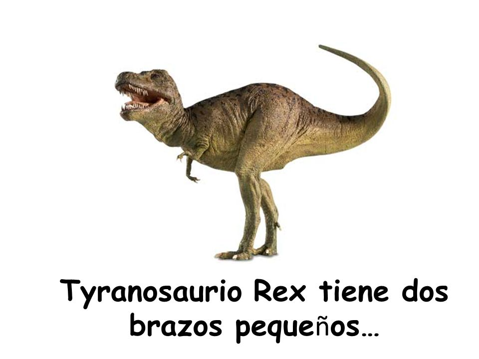 Tyranosaurio Rex tiene dos brazos peque ñ os…