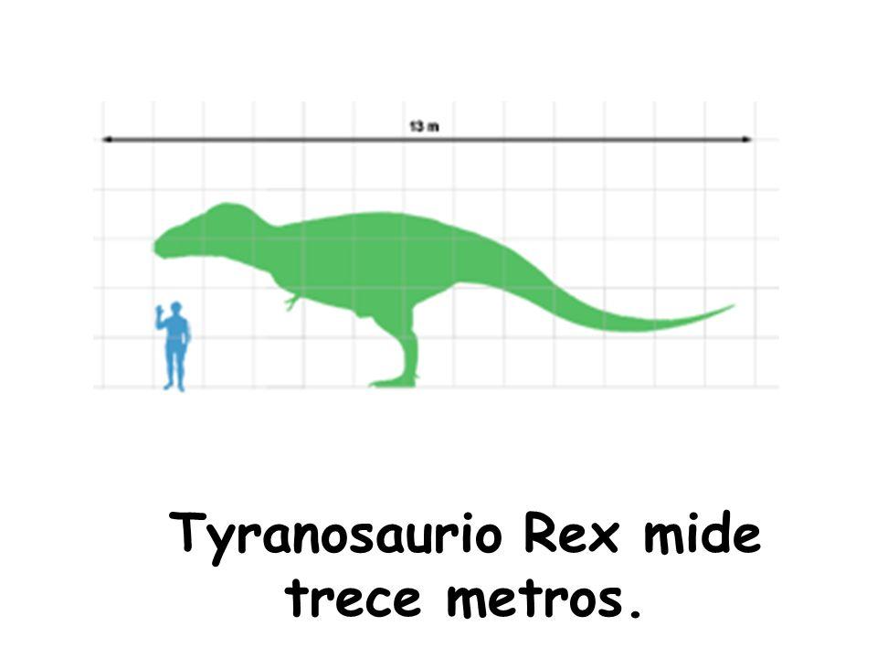 Tyranosaurio Rex mide trece metros.