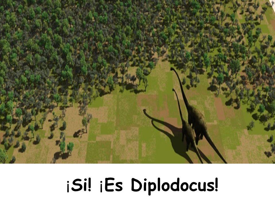 ¡ Si! ¡ Es Diplodocus!