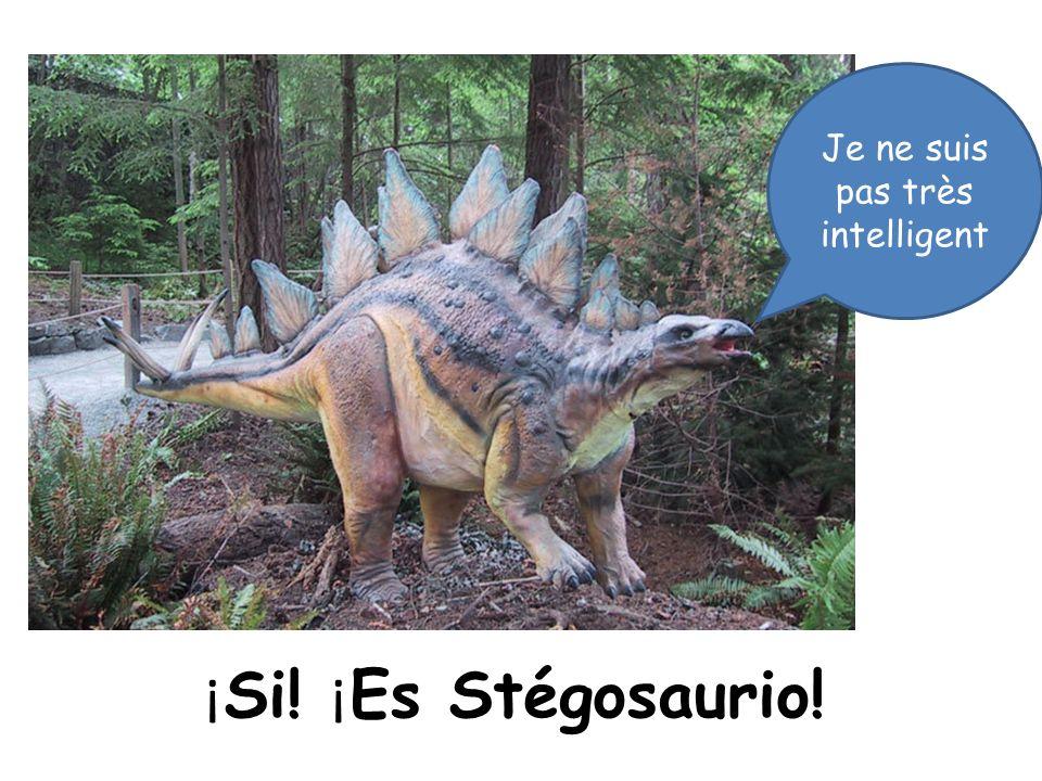 ¡ Si! ¡ Es Stégosaurio! Je ne suis pas très intelligent