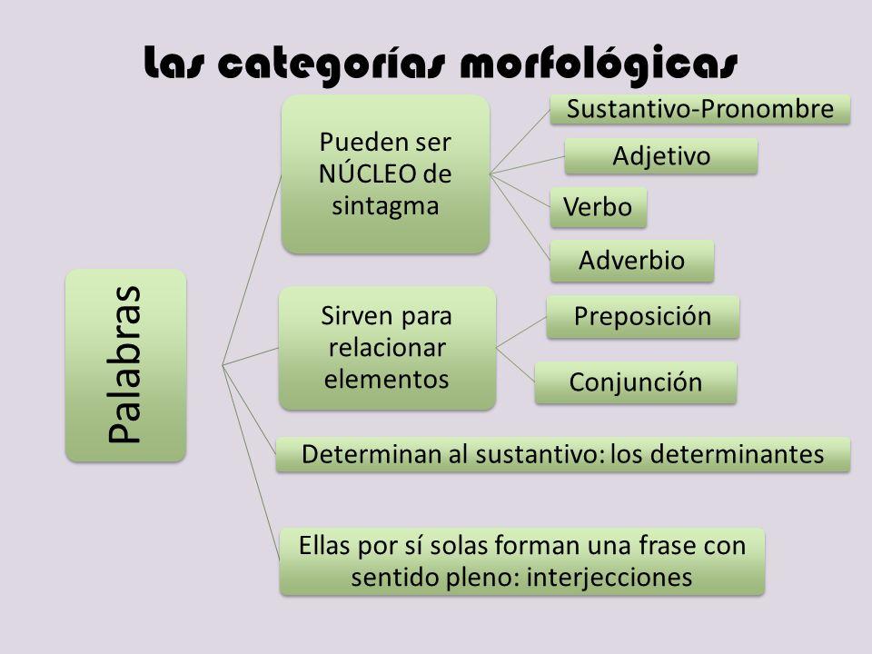 Las categorías morfológicas Palabras Pueden ser NÚCLEO de sintagma Sustantivo-Pronombre Adjetivo Verbo Adverbio Sirven para relacionar elementos Prepo