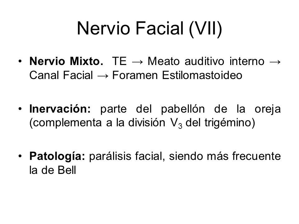 Nervio Facial (VII) Nervio Mixto. TE Meato auditivo interno Canal Facial Foramen Estilomastoideo Inervación: parte del pabellón de la oreja (complemen