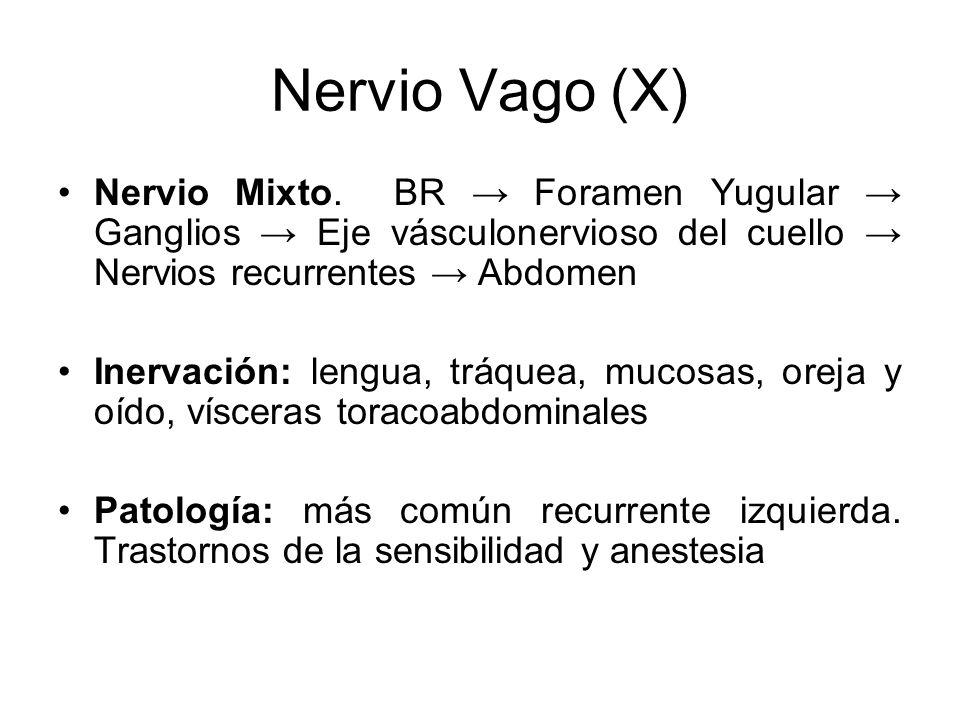 Nervio Vago (X) Nervio Mixto. BR Foramen Yugular Ganglios Eje vásculonervioso del cuello Nervios recurrentes Abdomen Inervación: lengua, tráquea, muco