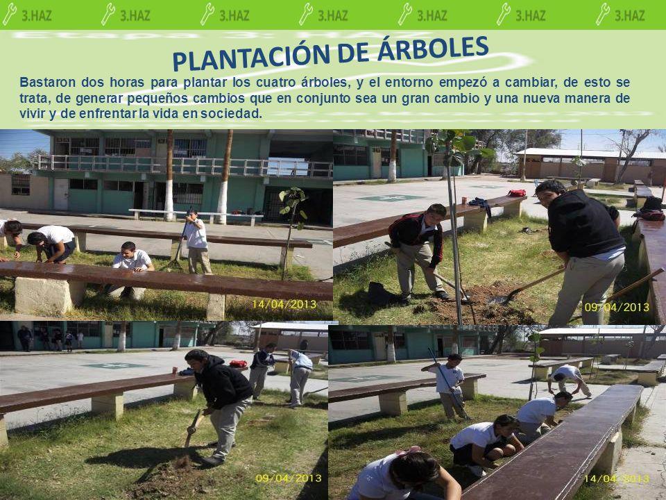 PLANTACIÓN DE ÁRBOLES Bastaron dos horas para plantar los cuatro árboles, y el entorno empezó a cambiar, de esto se trata, de generar pequeños cambios