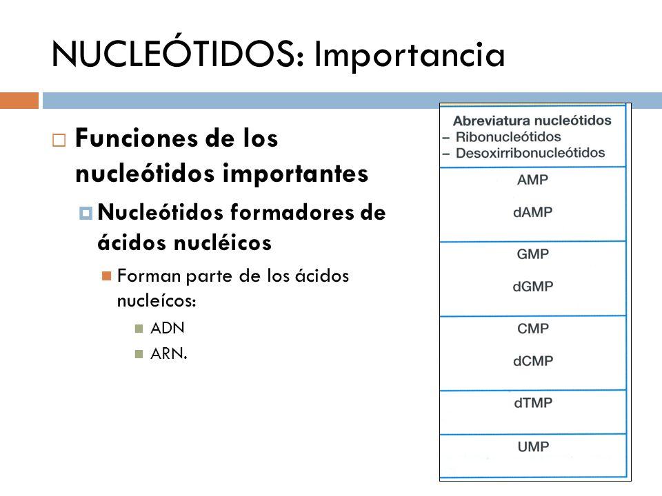 NUCLEÓTIDOS: Importancia Funciones de los nucleótidos importantes Nucleótidos formadores de ácidos nucléicos Forman parte de los ácidos nucleícos: ADN