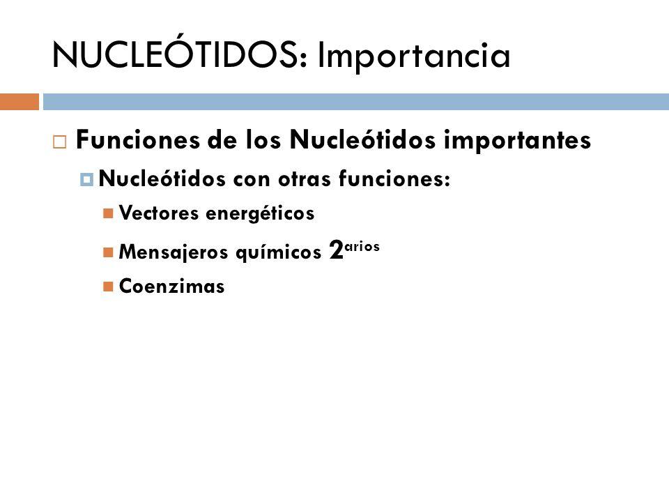 NUCLEÓTIDOS: Importancia Funciones de los Nucleótidos importantes Nucleótidos con otras funciones: Vectores energéticos Mensajeros químicos 2 arios Co