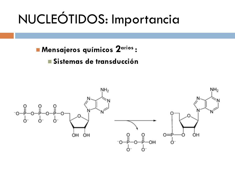 NUCLEÓTIDOS: Importancia Mensajeros químicos 2 arios : Sistemas de transducción