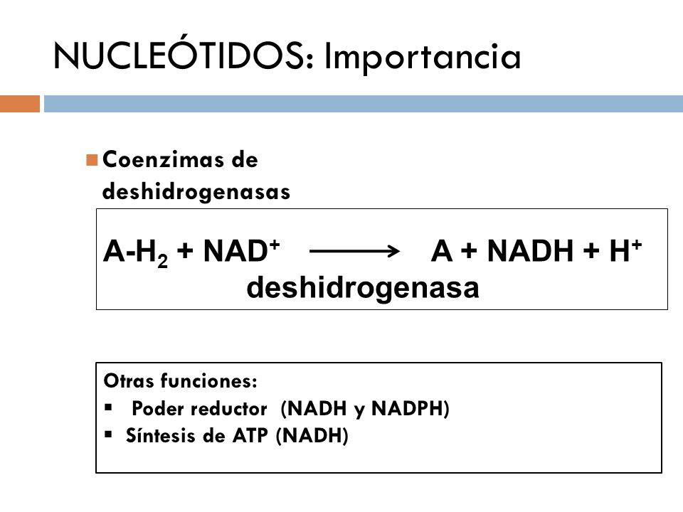 A-H 2 + NAD + A + NADH + H + deshidrogenasa Coenzimas de deshidrogenasas NUCLEÓTIDOS: Importancia Otras funciones: Poder reductor (NADH y NADPH) Sínte