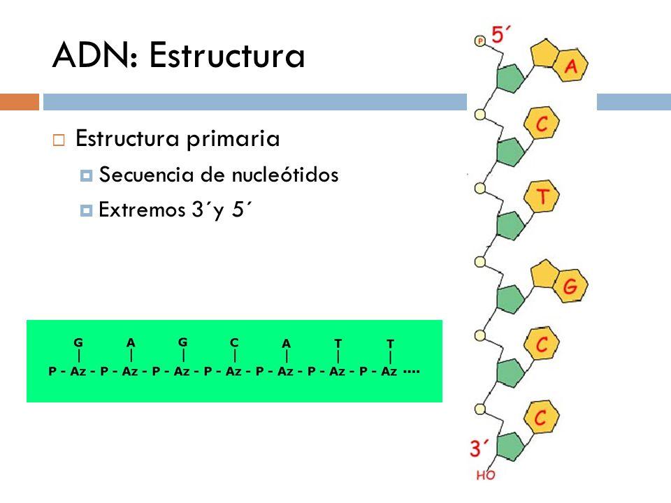 ADN: Estructura Estructura primaria Secuencia de nucleótidos Extremos 3´y 5´