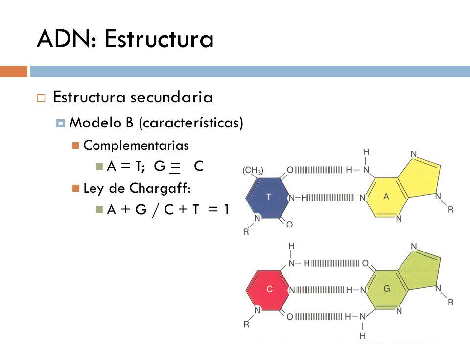 ADN: Estructura Estructura secundaria Modelo B (características) Complementarias A = T; G = C Ley de Chargaff: A + G / C + T = 1