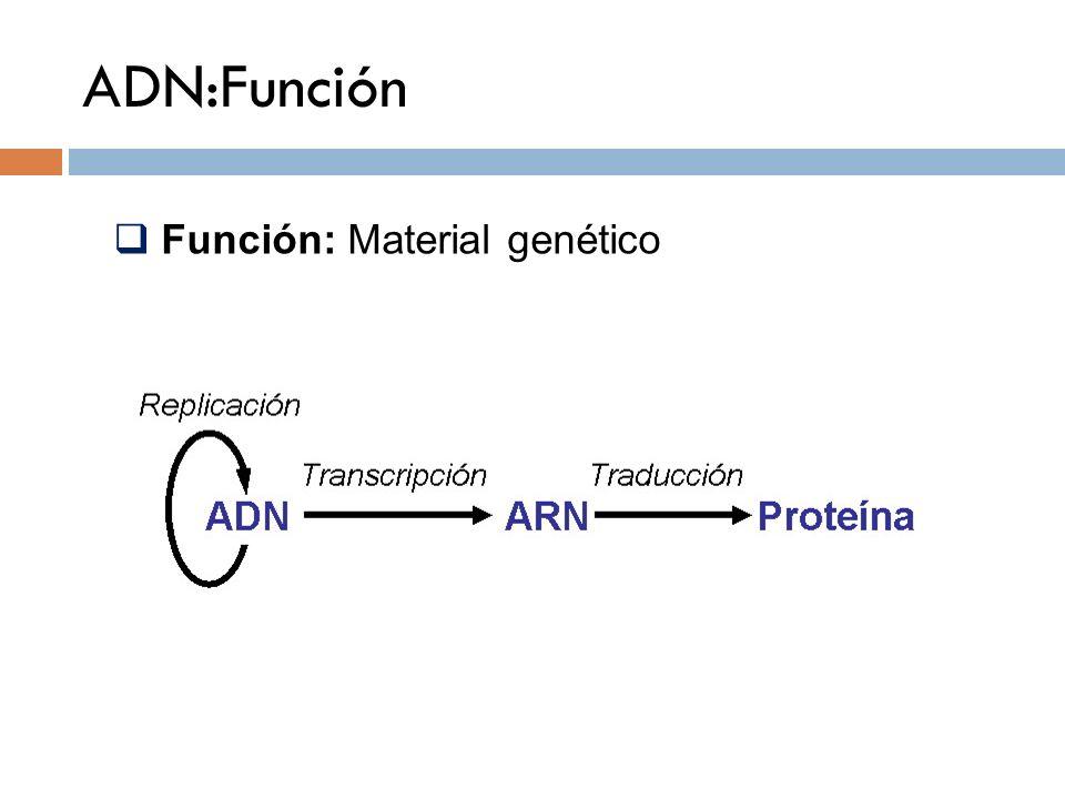 ADN:Función Función: Material genético
