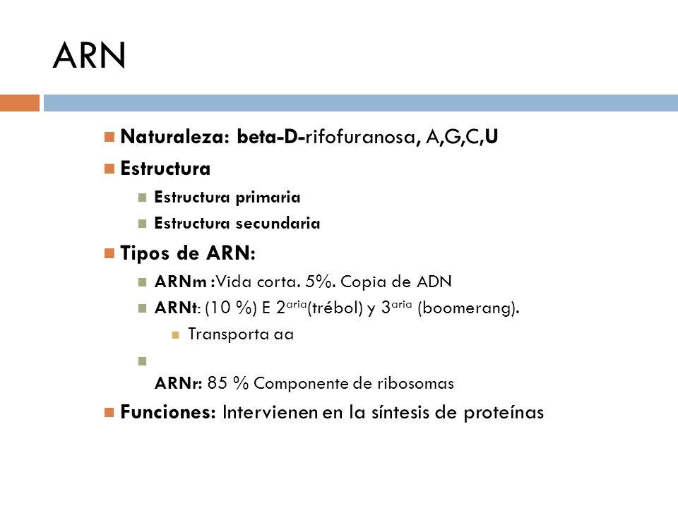 ARN Naturaleza: beta-D-rifofuranosa, A,G,C,U Estructura Estructura primaria Estructura secundaria Tipos de ARN: ARNm :Vida corta. 5%. Copia de ADN ARN
