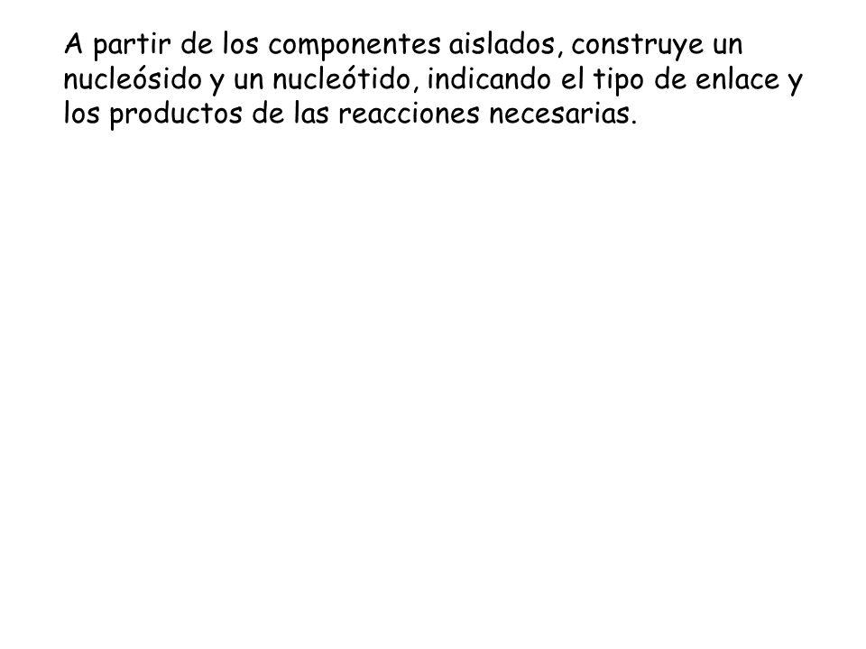 A partir de los componentes aislados, construye un nucleósido y un nucleótido, indicando el tipo de enlace y los productos de las reacciones necesaria