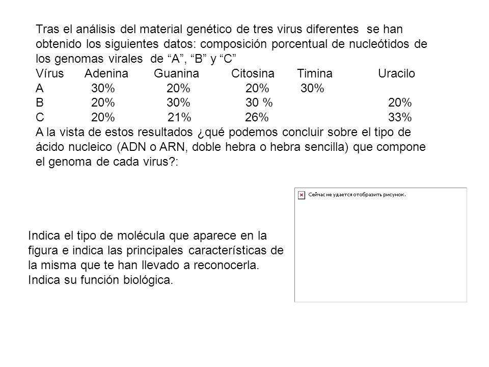 Tras el análisis del material genético de tres virus diferentes se han obtenido los siguientes datos: composición porcentual de nucleótidos de los gen