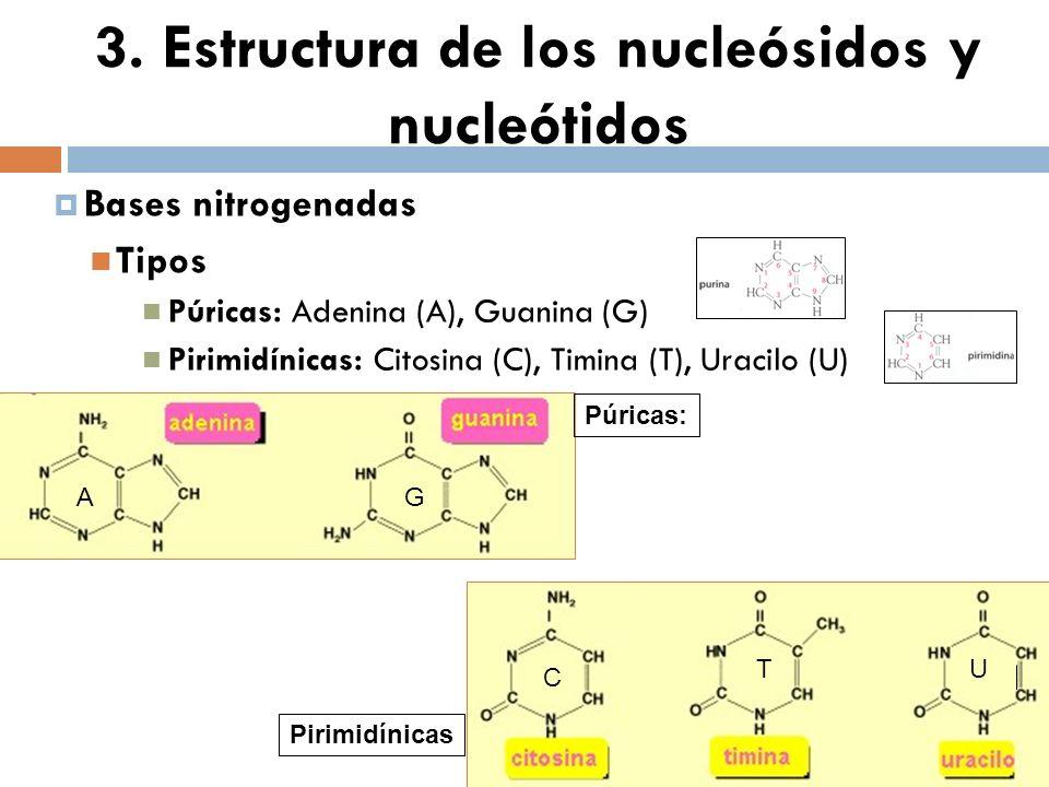 3. Estructura de los nucleósidos y nucleótidos Bases nitrogenadas Tipos Púricas: Adenina (A), Guanina (G) Pirimidínicas: Citosina (C), Timina (T), Ura