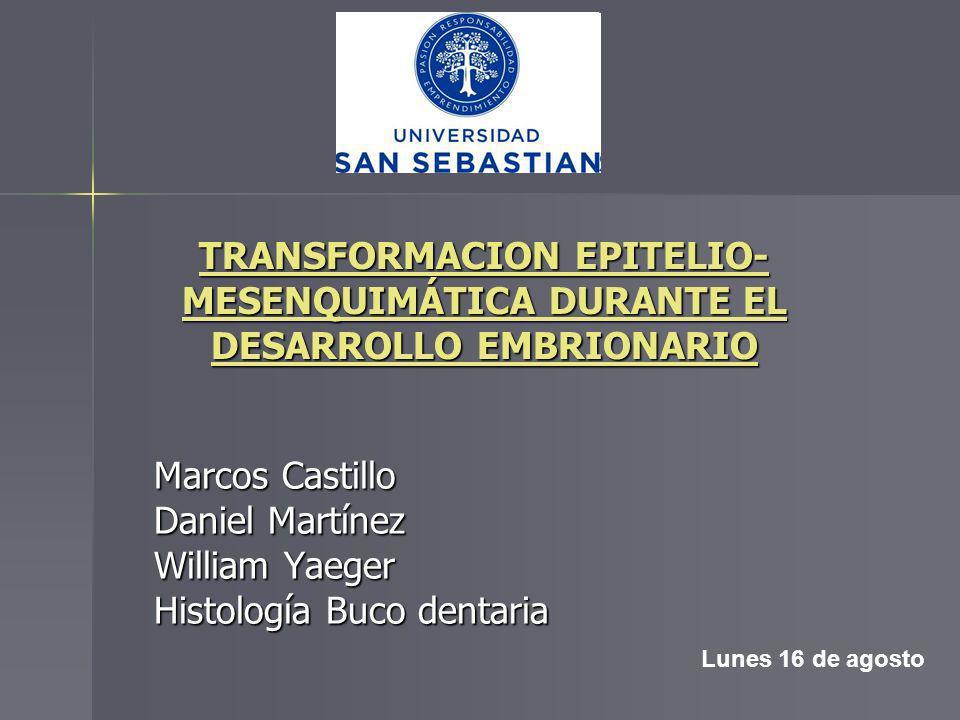 Marcos Castillo Daniel Martínez William Yaeger Histología Buco dentaria Lunes 16 de agosto TRANSFORMACION EPITELIO- MESENQUIMÁTICA DURANTE EL DESARROL