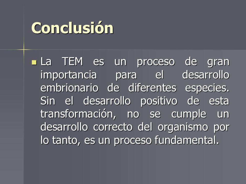 Conclusión La TEM es un proceso de gran importancia para el desarrollo embrionario de diferentes especies. Sin el desarrollo positivo de esta transfor
