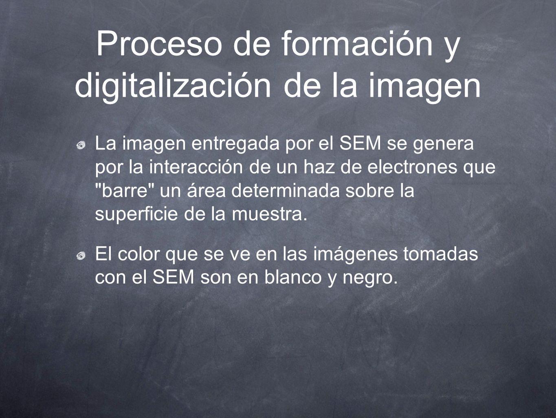 Proceso de formación y digitalización de la imagen La imagen entregada por el SEM se genera por la interacción de un haz de electrones que