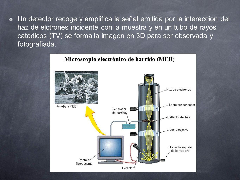 Un detector recoge y amplifica la señal emitida por la interaccion del haz de elctrones incidente con la muestra y en un tubo de rayos catódicos (TV)