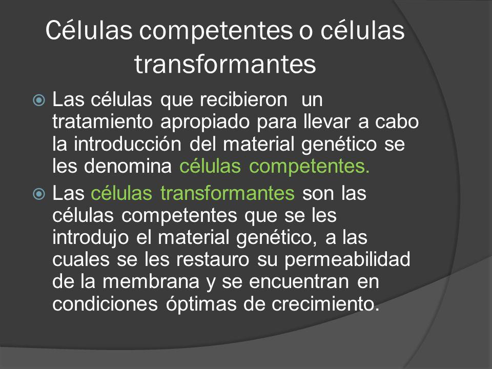 Células competentes o células transformantes Las células que recibieron un tratamiento apropiado para llevar a cabo la introducción del material genét