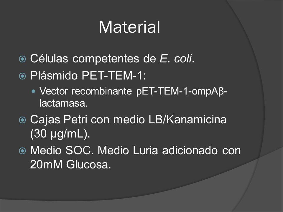 Material Células competentes de E. coli. Plásmido PET-TEM-1: Vector recombinante pET-TEM-1-ompAβ- lactamasa. Cajas Petri con medio LB/Kanamicina (30 µ