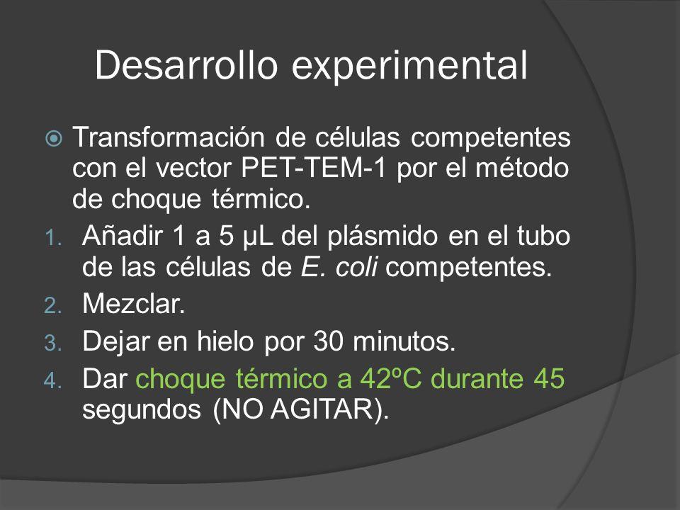 Desarrollo experimental Transformación de células competentes con el vector PET-TEM-1 por el método de choque térmico. 1. Añadir 1 a 5 µL del plásmido