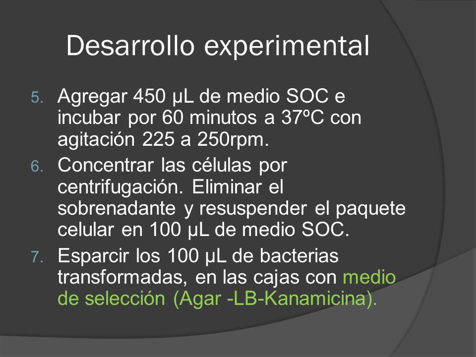 Desarrollo experimental 5. Agregar 450 µL de medio SOC e incubar por 60 minutos a 37ºC con agitación 225 a 250rpm. 6. Concentrar las células por centr