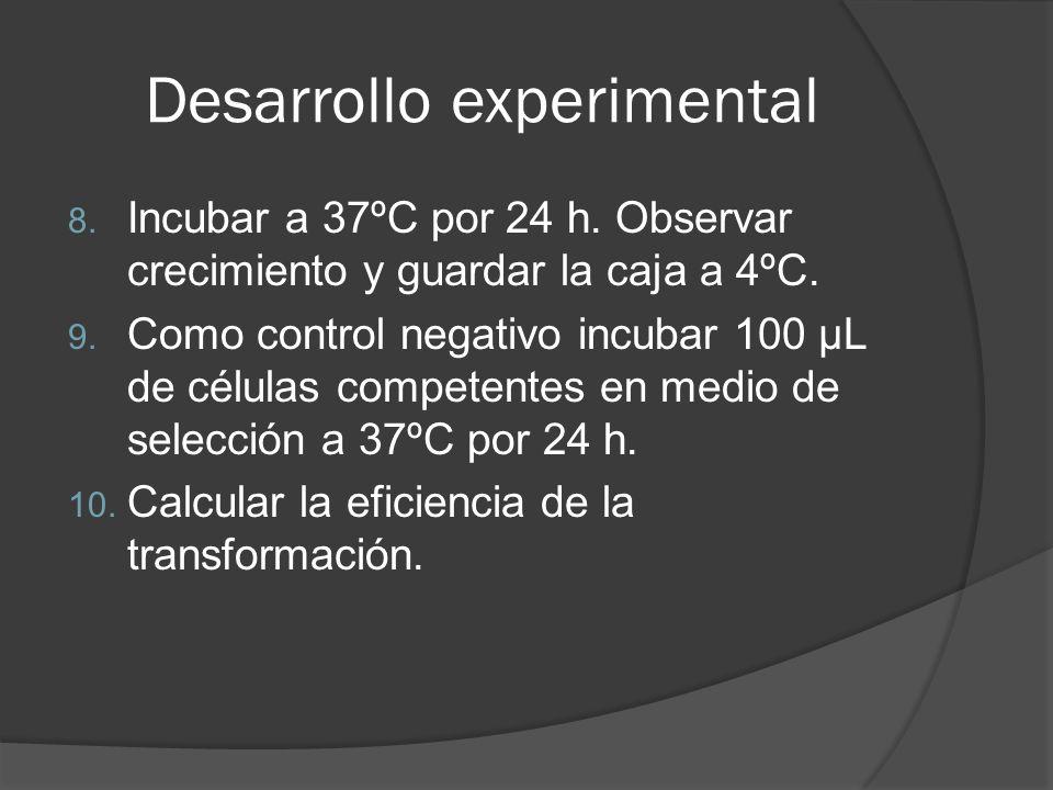 Desarrollo experimental 8. Incubar a 37ºC por 24 h. Observar crecimiento y guardar la caja a 4ºC. 9. Como control negativo incubar 100 µL de células c