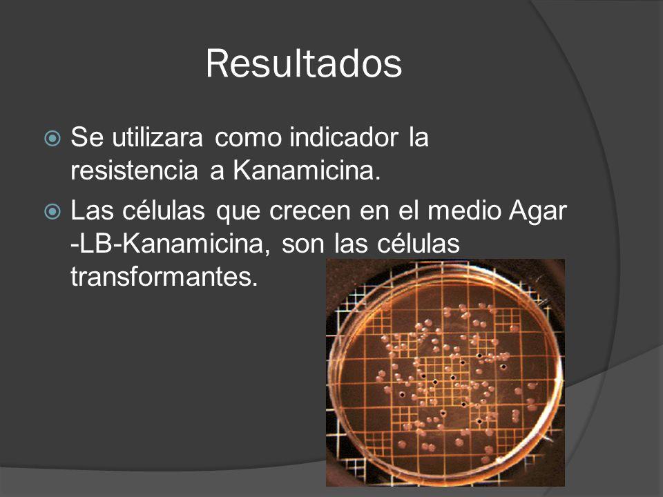 Resultados Se utilizara como indicador la resistencia a Kanamicina. Las células que crecen en el medio Agar -LB-Kanamicina, son las células transforma