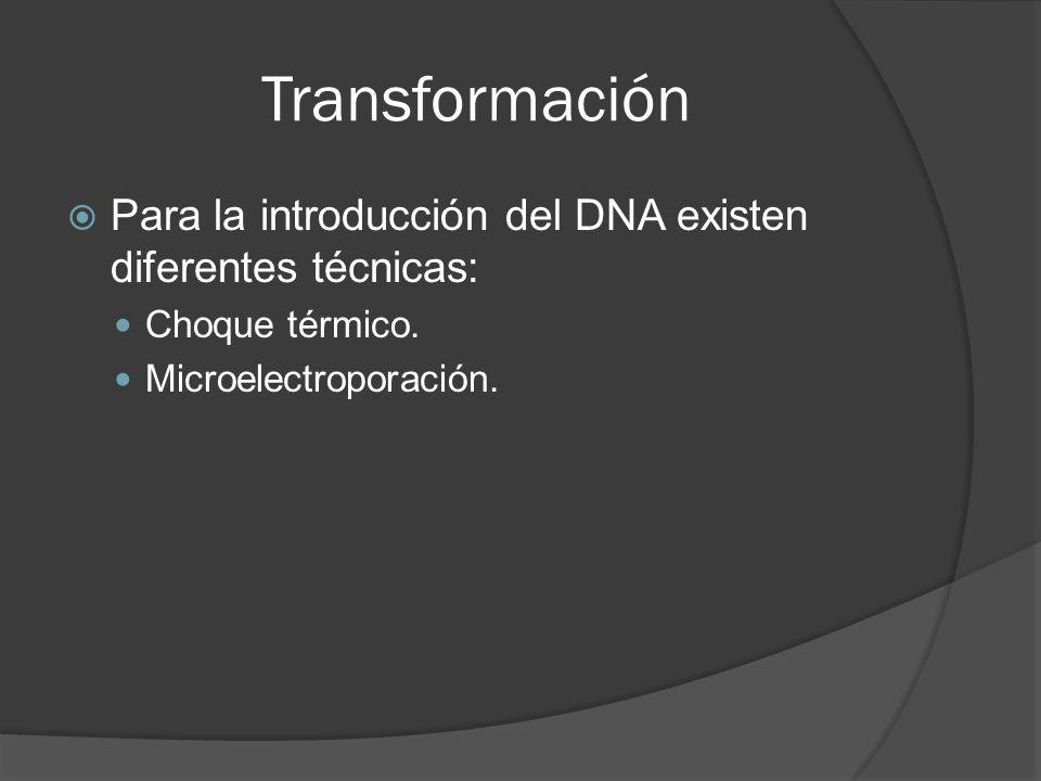 Para la introducción del DNA existen diferentes técnicas: Choque térmico. Microelectroporación.