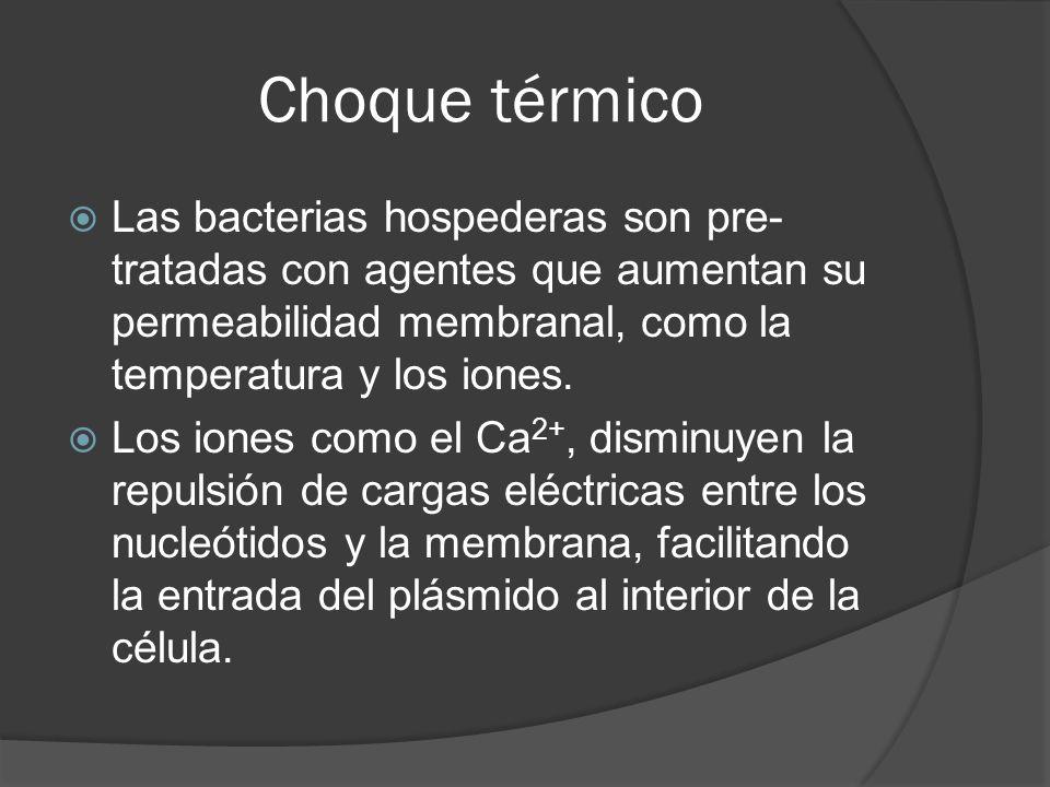 Choque térmico Las bacterias hospederas son pre- tratadas con agentes que aumentan su permeabilidad membranal, como la temperatura y los iones. Los io