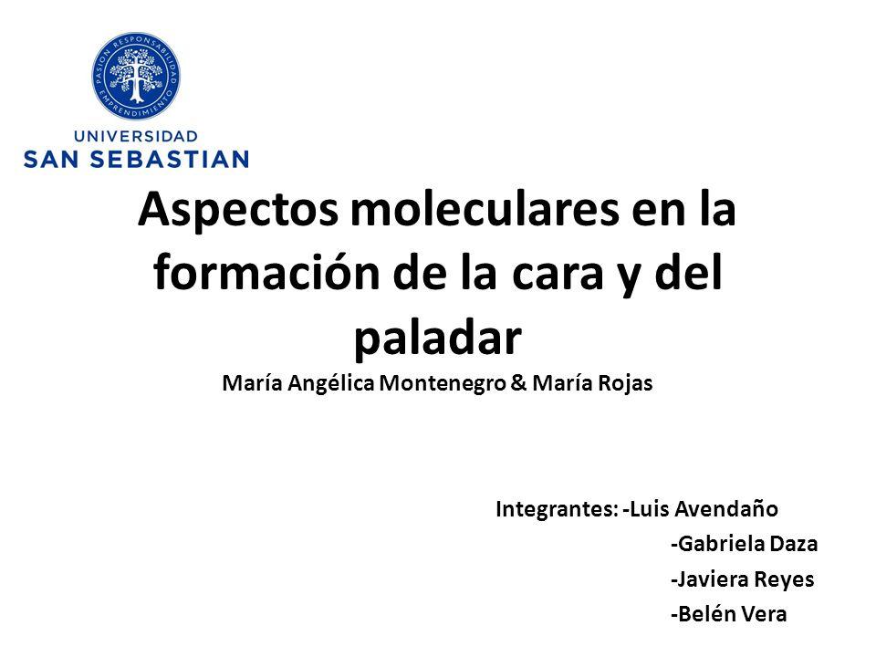 Integrantes: -Luis Avendaño -Gabriela Daza -Javiera Reyes -Belén Vera Aspectos moleculares en la formación de la cara y del paladar María Angélica Mon