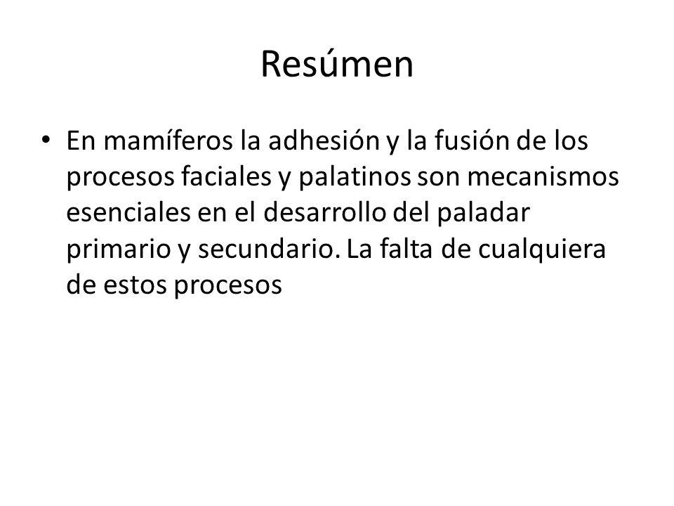 Resúmen En mamíferos la adhesión y la fusión de los procesos faciales y palatinos son mecanismos esenciales en el desarrollo del paladar primario y se