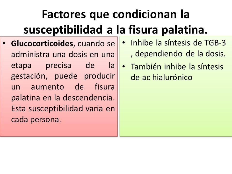 Factores que condicionan la susceptibilidad a la fisura palatina. Glucocorticoides, cuando se administra una dosis en una etapa precisa de la gestació