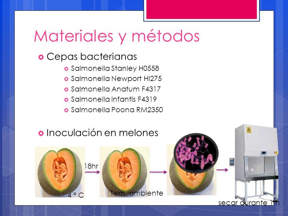 Materiales y métodos Cepas bacterianas Salmonella Stanley H0558 Salmonella Newport Hl275 Salmonella Anatum F4317 Salmonella Infantis F4319 Salmonella Poona RM2350 Inoculación en melones 4 ° C Tem.