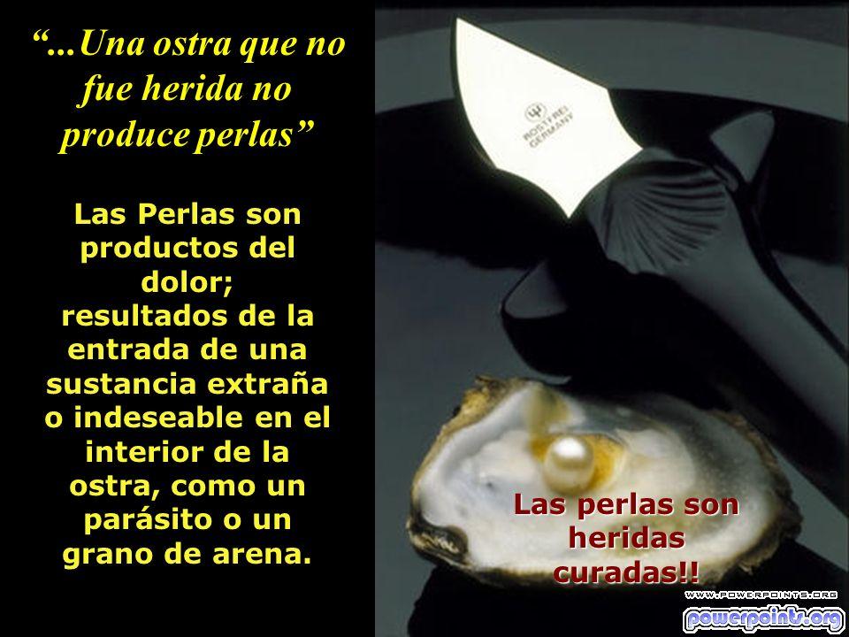 ...Una ostra que no fue herida no produce perlas Las perlas son heridas curadas!! Las Perlas son productos del dolor; resultados de la entrada de una