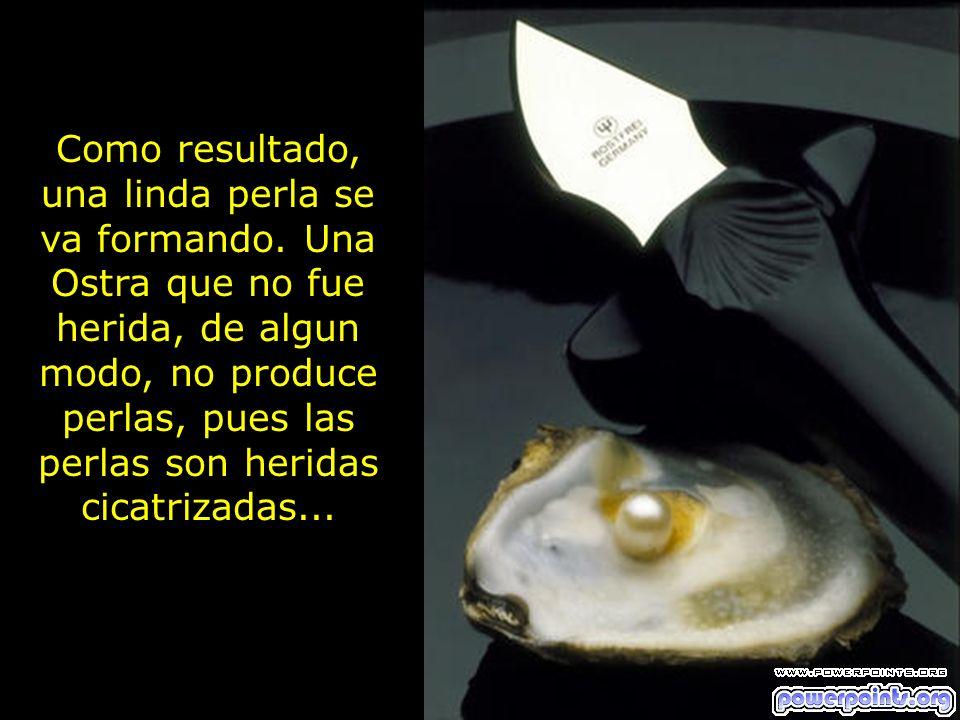 Como resultado, una linda perla se va formando. Una Ostra que no fue herida, de algun modo, no produce perlas, pues las perlas son heridas cicatrizada