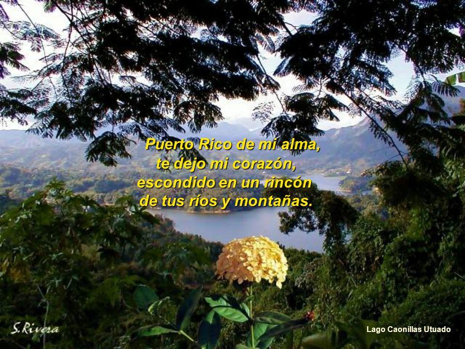 Hoy te dedico mi canto, Isla Verde por la divina fortuna, de nacer bajo la luna, de la isla del encanto.