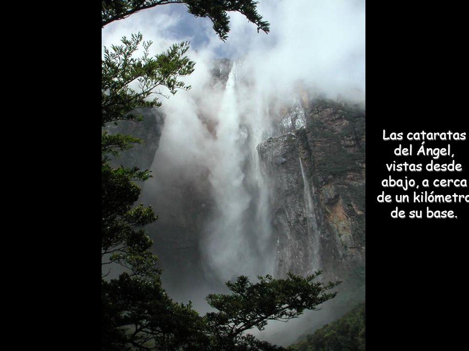 Las cataratas del Ángel Nombre autóctono : Kerepakupay Vená Las cataratas del Ángel son las más altas cataratas de agua dulce del mundo, con una altur