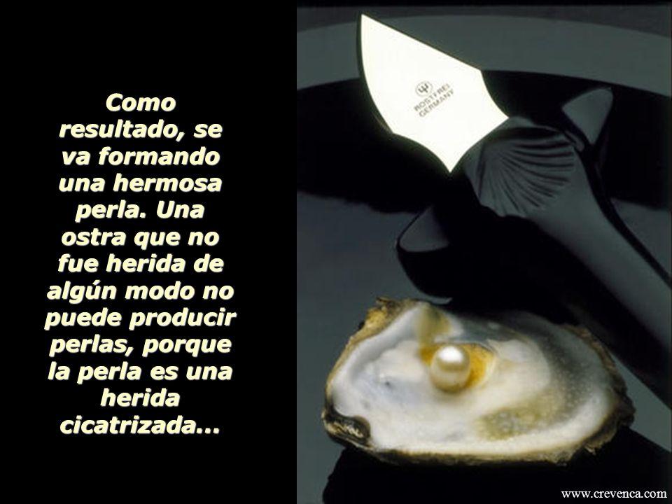 En la parte interna de la ostra se encuentra una sustancia lustrosa llamada NÁCAR. Cuando penetra en la ostra un grano de arena las células de nácar c