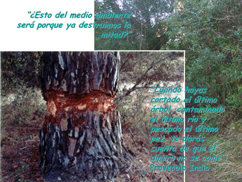 ¿Esto del medio ambiente será porque ya destruimos la mitad? Cuando hayas cortado el último árbol, contaminado el último río y pescado el último pez,