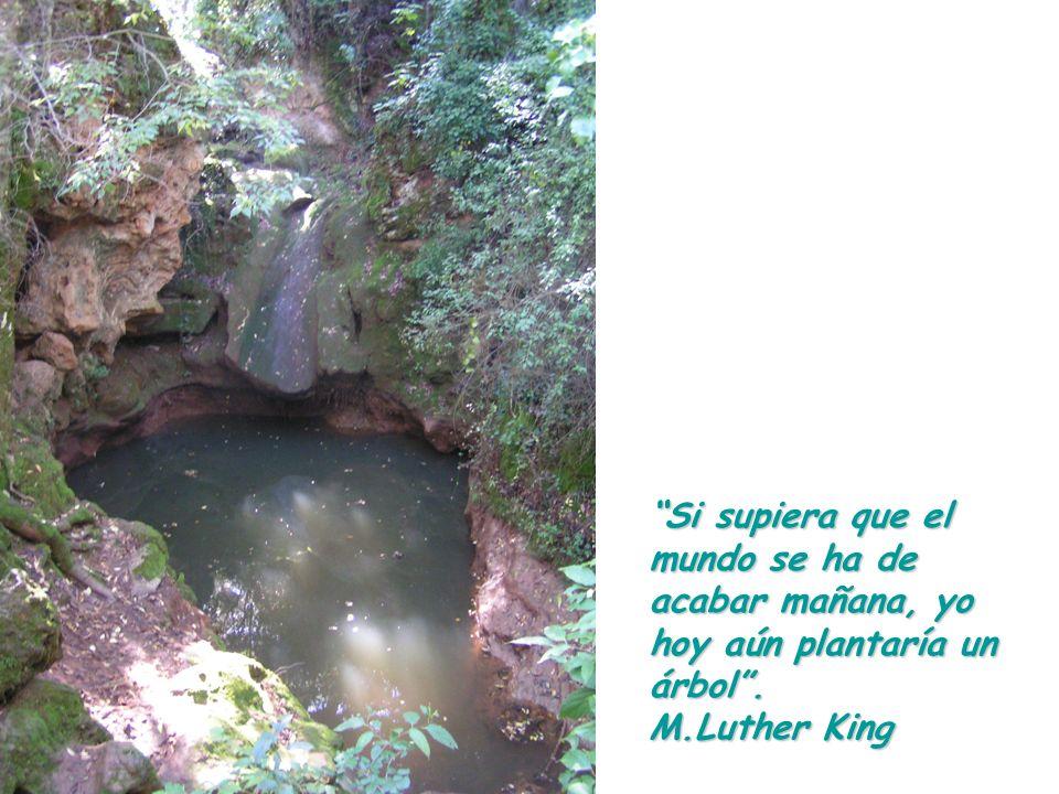 Si supiera que el mundo se ha de acabar mañana, yo hoy aún plantaría un árbol. M.Luther King
